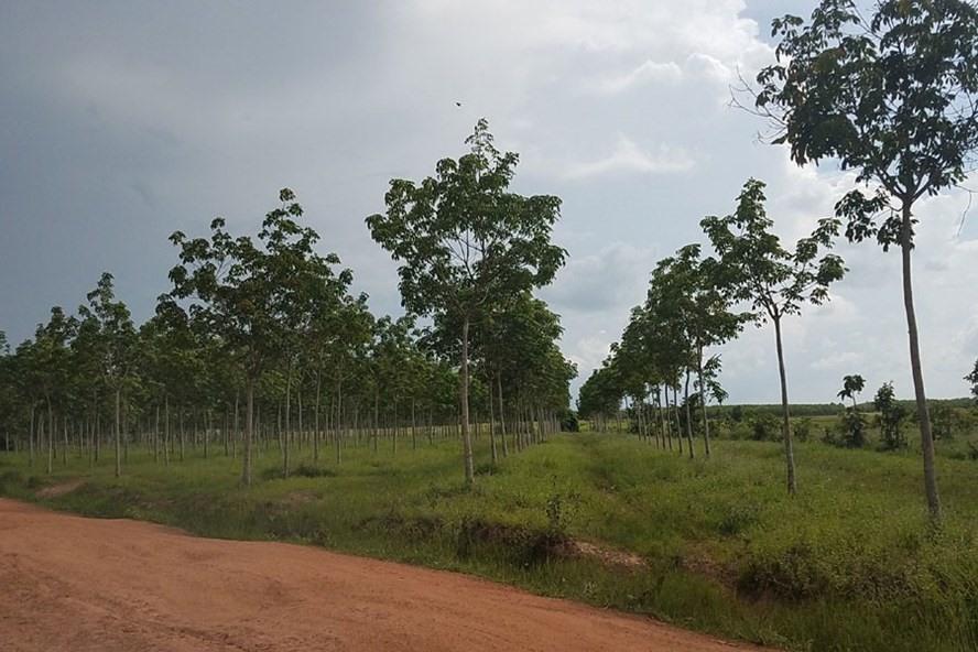 đất rừng